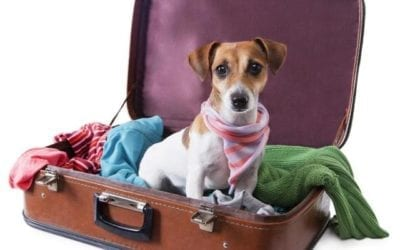 Crucial Advice For First Time Pet Owners-by Jessica Brody